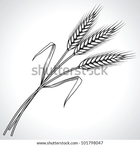 Ripe black wheat ears isolated, vector illustration. - stock vector