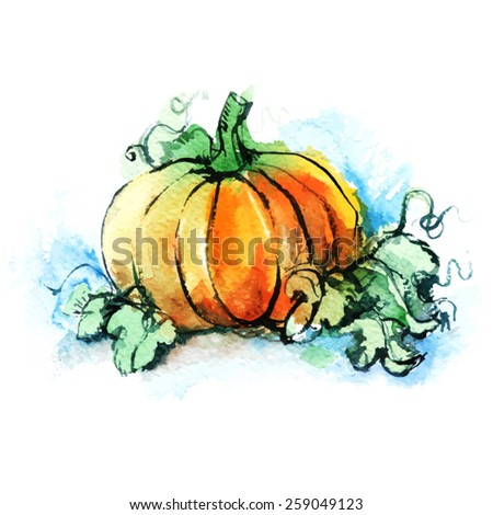 ripe orange pumpkin with green leaves, vegetable, autumn harvest, watercolor sketch/ vector illustration - stock vector