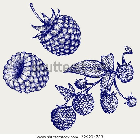 Ripe raspberry with leaf. Doodle style - stock vector