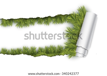 Ripped Paper with Fir Twigs - stock vector