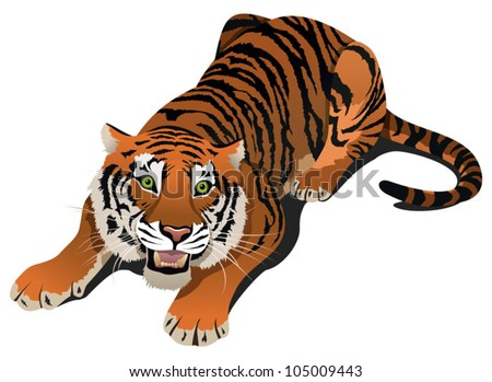 Roaring angry tiger, vector illustration - stock vector