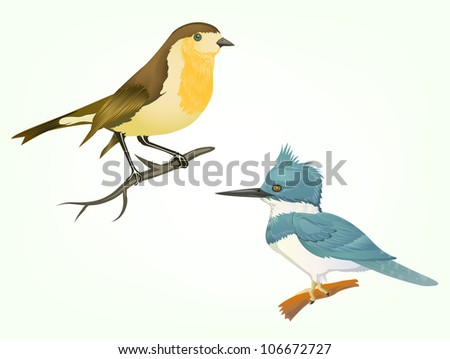 robin birds on branch isolated on white - stock vector