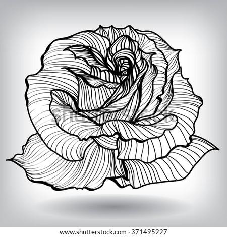 Rose Floral Elements for design, EPS10 Vector background  - stock vector