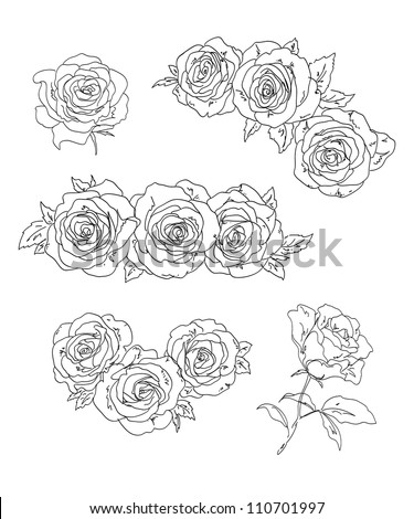 Roses. Vector illustration. - stock vector