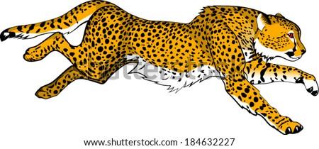 Running cheetah vector - photo#2