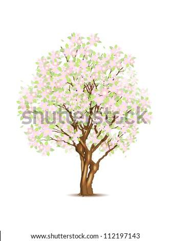 Sakura tree isolated on white, vector illustration, eps10, 3 layers, easy editable - stock vector
