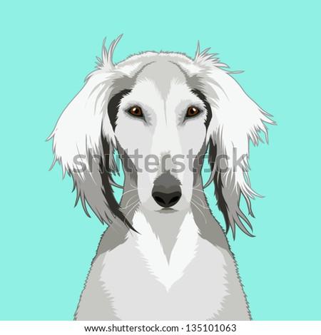 Saluki, The buddy dog - stock vector