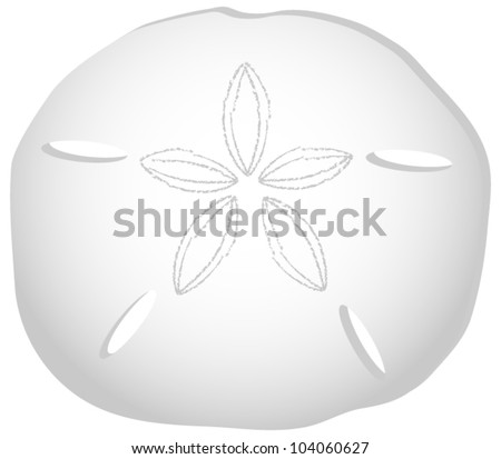 Sand Dollar Isolated on White - stock vector