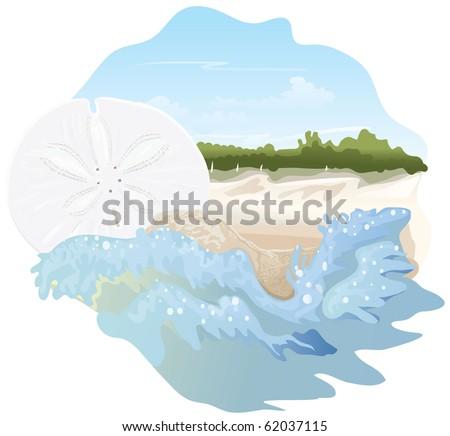 Sand dollar on beach spot illustration - stock vector