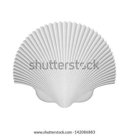Scallop Shell. Isolated On White. Vector Illustration - stock vector