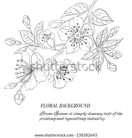 Scatch of spring sakura. Vector illustration. - stock vector