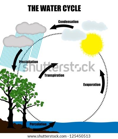 Schematic representation of the water cycle in nature,vector illustration (Helpful for Education & Schools) - stock vector