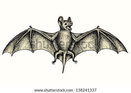 Screaming flying bat with extended wings, hand drawn vector illustration - stock vector