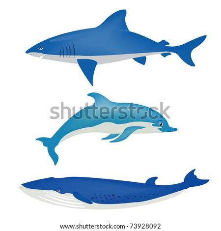 Sea animals on white background - stock vector