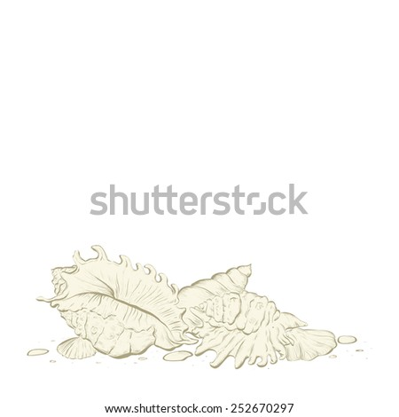Sea shell background with space for text - stock vector