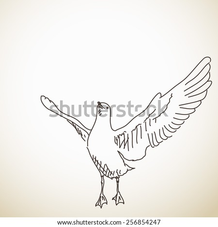 Seagull ready to fly Vector sketch Hand drawn illustration - stock vector