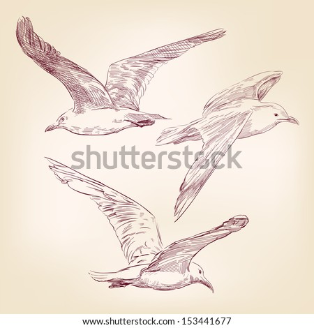 seagulls set  hand drawn vector llustration realistic sketch - stock vector