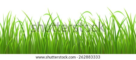 Seamless fresh green grass on white background, vector illustration - stock vector