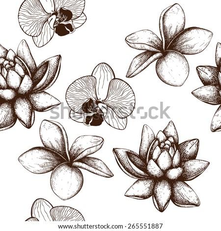 Frangipani Flower Drawing Ink Hand Drawn Frangipani