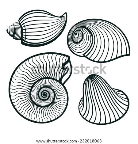 seashells set outline engraving vector illustration - stock vector