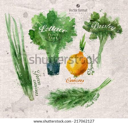 Seasoning. Watercolor. Vector format - stock vector