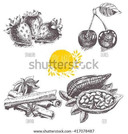 Series - vector fruit, vegetables and spices. Hand-drawn illustration in vintage style. Sketch. Healthy food. Linear graphic. Set of strawberry, cherry, cocoa, cinnamon. - stock vector