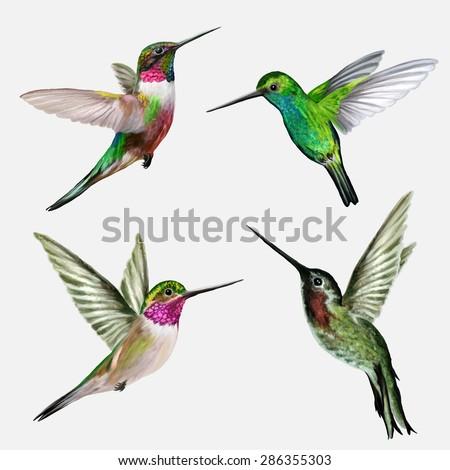 Set four small bird hummingbird - stock vector