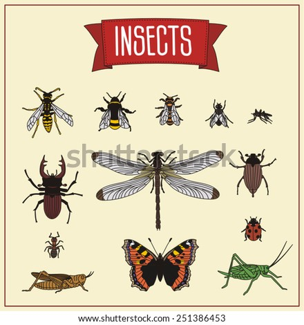 set insects  - stock vector