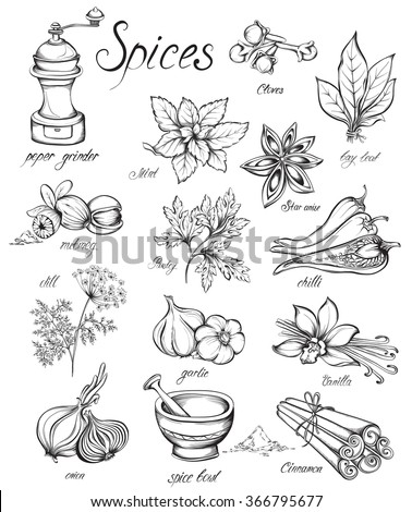 Set kitchen herbs and spices. Hand drawn vector illustration - stock vector