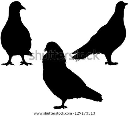 LPO UK News  Wine and Birds  kjhallorguk