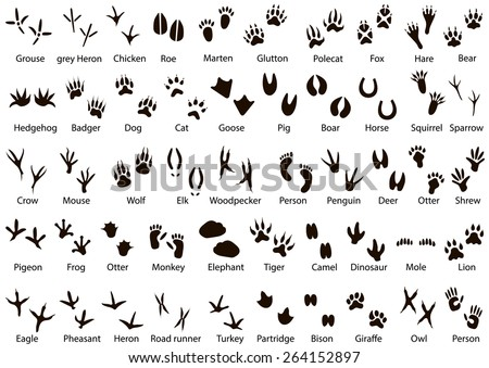 Set of animal and bird trails with name  - stock vector