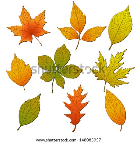 Set of autumn leafs - stock vector