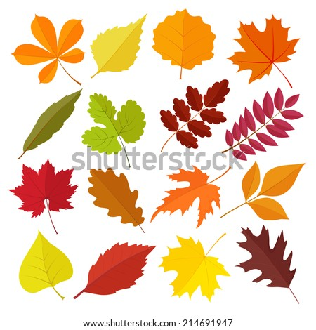 set of autumn leaves in flat style. isolated on  white background - stock vector