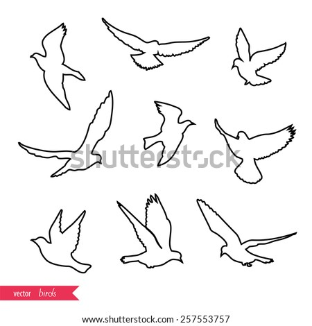 Set of birds stroke silhouettes - flying. - stock vector