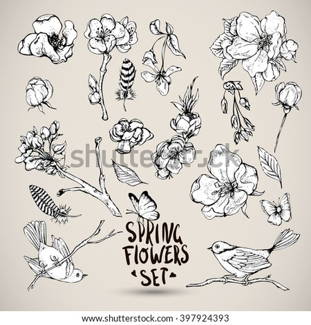 Set of Black and white Nature elements, separately leaves flower, blooming branches cherry, pear flower, sakura, apple trees flower birds feathers and butterflies, Vector nature botanical illustration - stock vector