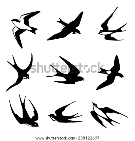 Set of black isolated vector silhouettes of birds (barn swallow, swift, house martin).  Vector illustration.  - stock vector