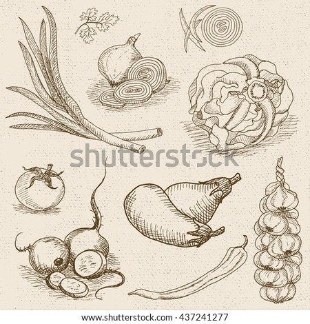 Set of chalk hand drawn, in sketch style, food and spices, old paper textured background. Eggplant, onions, cabbage, garlic, tomato, pepper, radish, turnip, beets. Hand drawn vector illustration. - stock vector