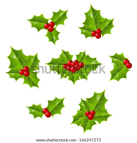 Set of Christmas holly leaves - stock vector