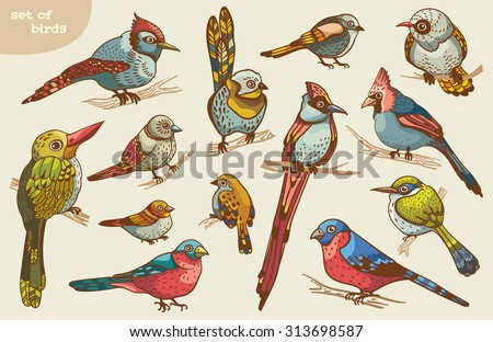 Set of colored cartoon birds. Vector of animal illustration. - stock vector
