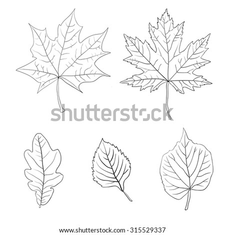 Set of colorful autumn leaves. Vector illustration. 1 - stock vector