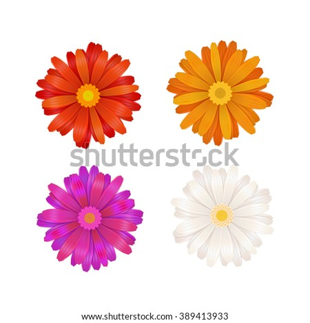 Set of colourful gerbera flowers isolated on white - stock vector