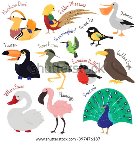 Set of cute cartoon bird isolated on white background. Vector animal illustration. Child fun pattern icon. Duck, toucan, swan, heron, flamingo, peacock, eagle, bullfinch, pelican, pheasant hummingbird - stock vector