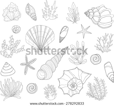 Set of cute hand drawn contour shells and algae. Vector - stock vector