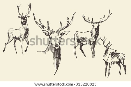 Set of deers, engraving style, vintage illustration, hand drawn, sketch - stock vector
