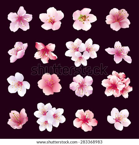 Set of different beautiful cherry tree flowers isolated on black background. Collection of pink, purple, white sakura blossom - japanese cherry tree.  Elements of floral spring design, vector. - stock vector