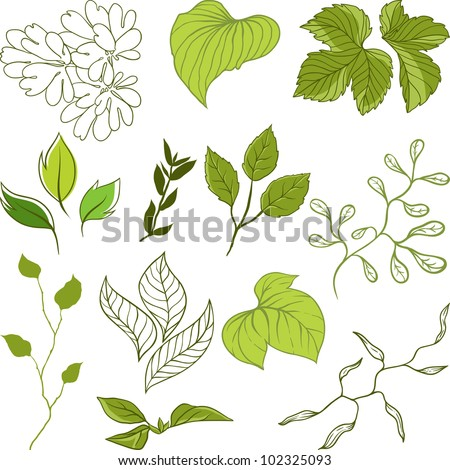 Set of different leaves. A vector illustration. - stock vector