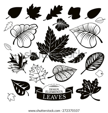 Set of different leaves vector illustration - stock vector