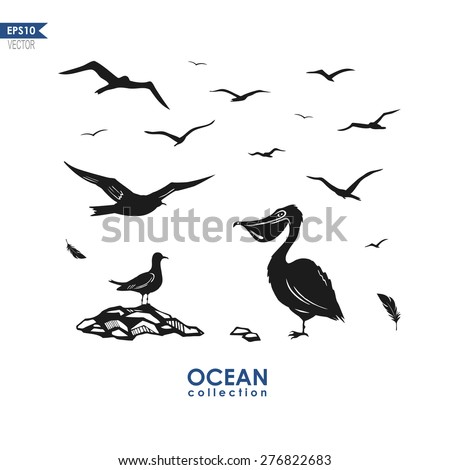 set of different sea birds: seagull, pelican, albatross, birds silhouettes isolated on white, black and white design - stock vector