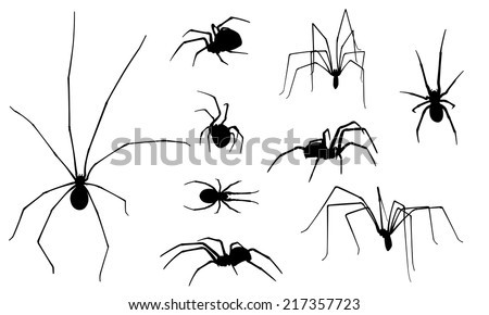 set of different spiders isolated - stock vector