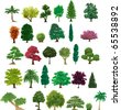set of different trees - stock vector